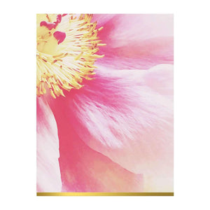 Ashley Woodson Bailey Greeting Assortment Notecard Set Greeting Cards Galison
