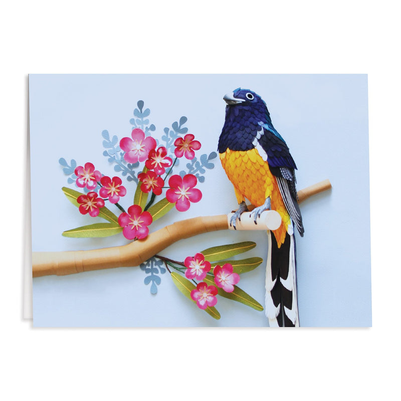 Birds of the World Greeting Card Assortment Greeting Cards Diana Beltran Herrera Collection