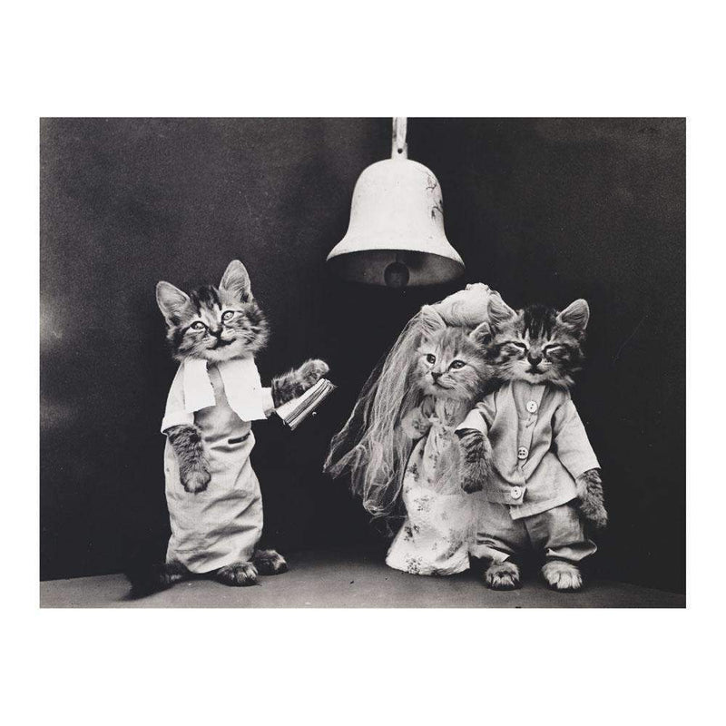Classic Vintage Cat Memes DIY Greeting Card Folio DIY Greeting Cards Galison