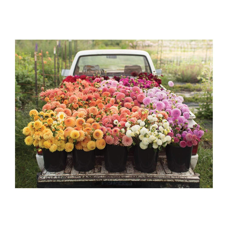Floret Farm's Cut Flower Garden 2-Sided 500 Piece Puzzle 2-sided 500 Piece Puzzles Galison