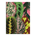 Houseplant Jungle Greeting Assortment Notecards Greeting Cards Galison