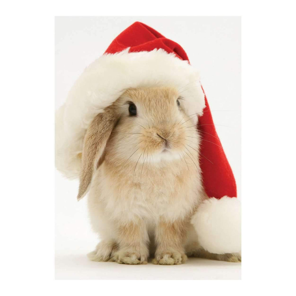 Santa Bunny Half Note Holiday Notecards Galison