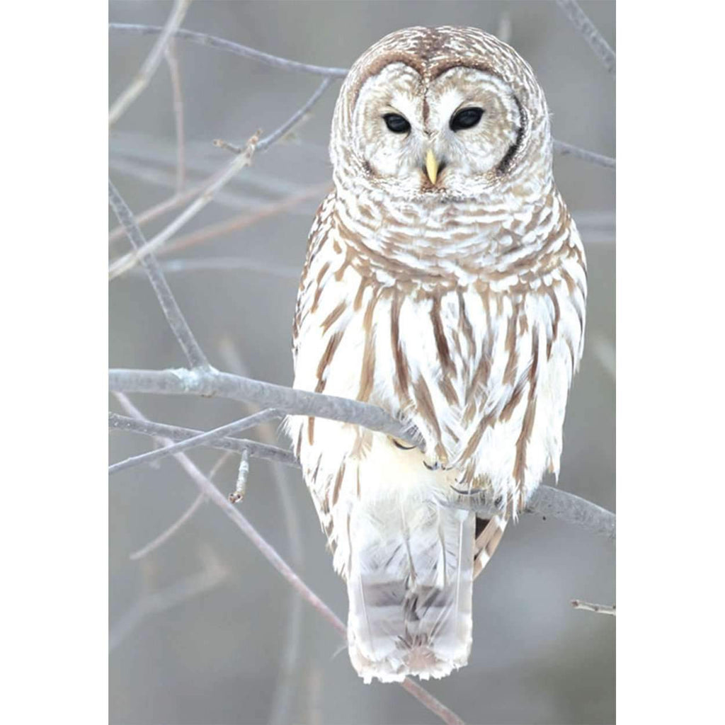 Snow Owl Half Note Boxed Cards Holiday Notecards Galison