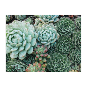 Succulent Garden 2-Sided 500 Piece Puzzle 2-sided 500 Piece Puzzles Galison