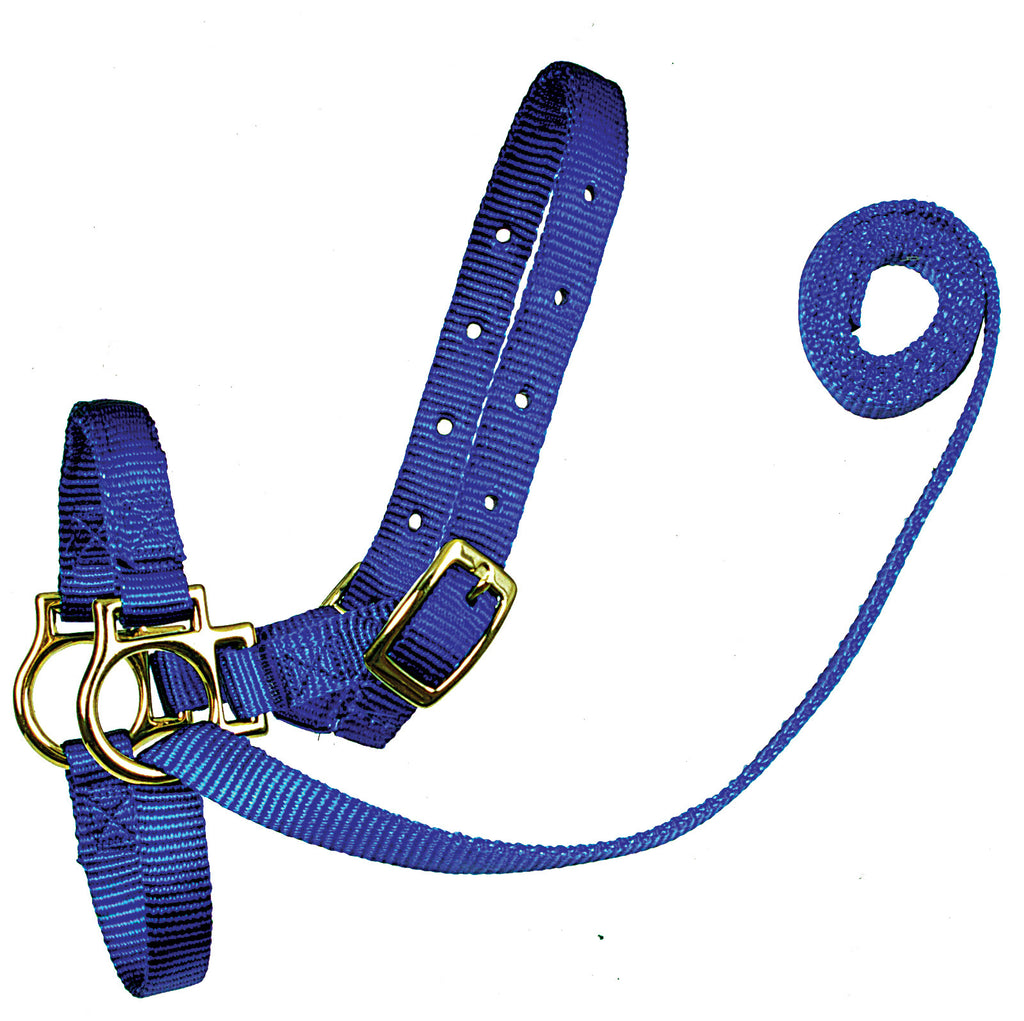 Sheep Nylon Halters with Attached Lead