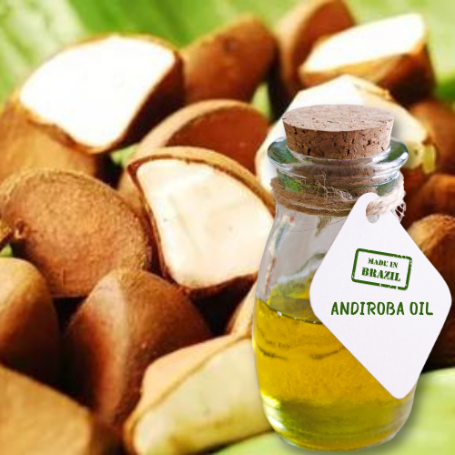 Andiroba Oil  - Natural Unrefined - Wholesale