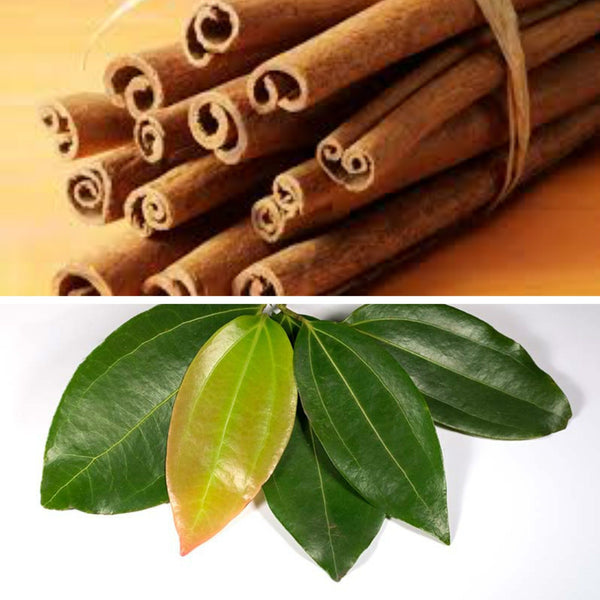 CINNAMON LEAF  - Essential Oil - EO0289  - - Paris Fragrances USA