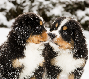 Winter Weather Safety for Pets