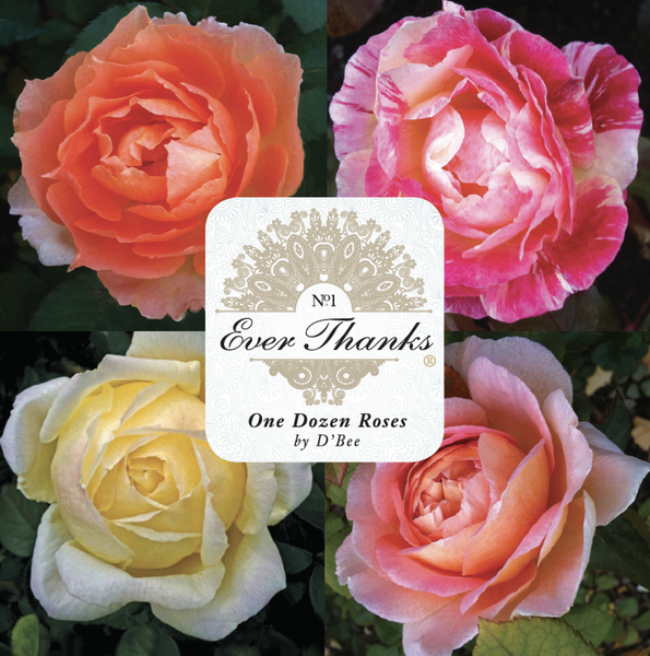 EVER THANKS® Gift Enclosure Cards - Quotes for Life