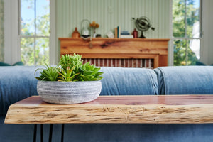 Close up of a live edge sofa table with a plant sitting on top. Handmade by Knaughty Log Co.
