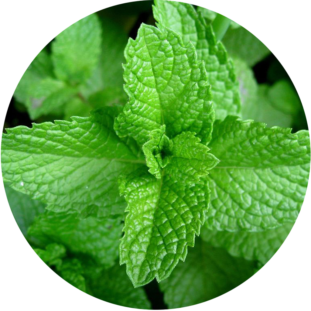 organic-peppermint-oil