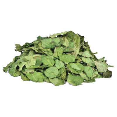 Organic West African Dried Loose Moringa Leaves - The Nok Apothecary