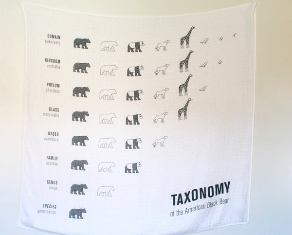 wall hanging taxonomy bamboo cotton swaddle blanket