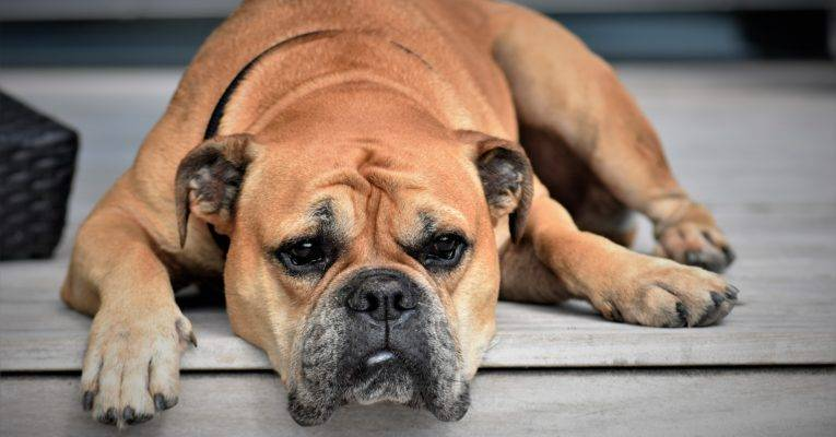 Fact: Pet obesity is on the rise. Here's what you need to know.