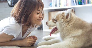 4 dental health tips for your dog