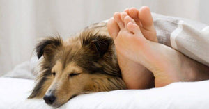Is your dog sleeping in your bed affecting your health?