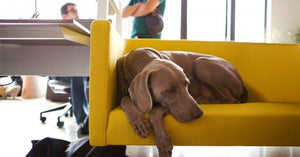 Take Your Dog to Work Day: tips for you and your dog