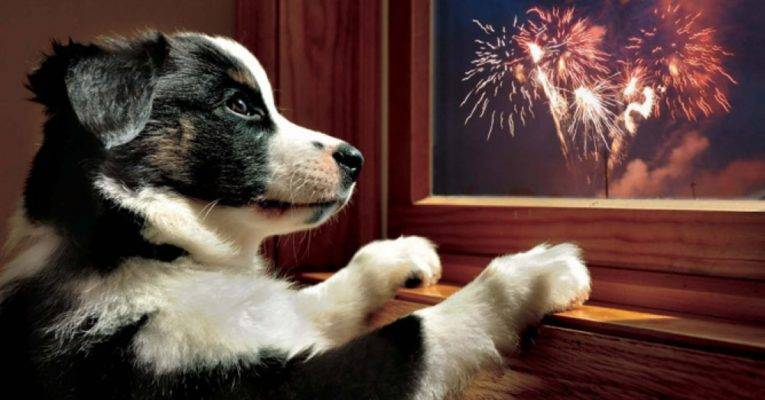 Dogs & Fireworks: Do's and Don'ts for Handling Canine Anxiety