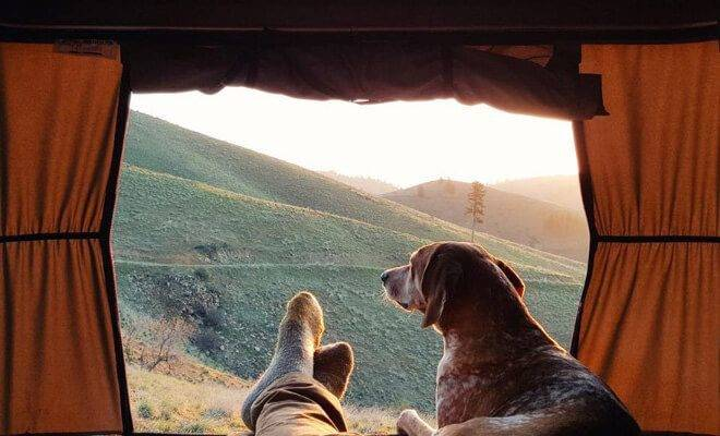 Camping with dogs: tips and advice for camping with your furry friend