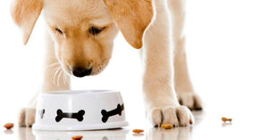 Top-selling dog foods with dangerous ingredients