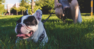 Dog Etiquette 101: be neighborly by training your dog well
