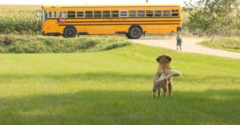 5 Tips to help your pet beat the 'back to school' blues