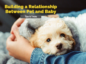 Building a Relationship Between Pet and Baby