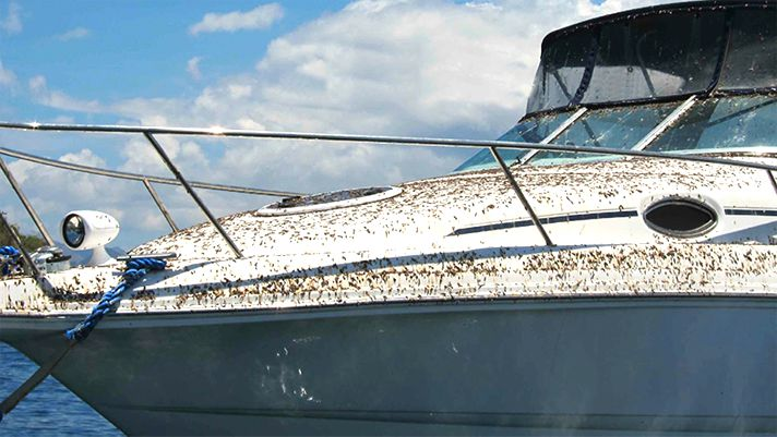 What keeps birds away from a boat?