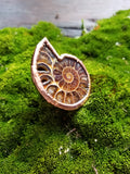 Ammonite Ring size 7.5