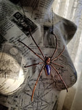 Orb Spider with Violet Rainbow Moonstone Coffin