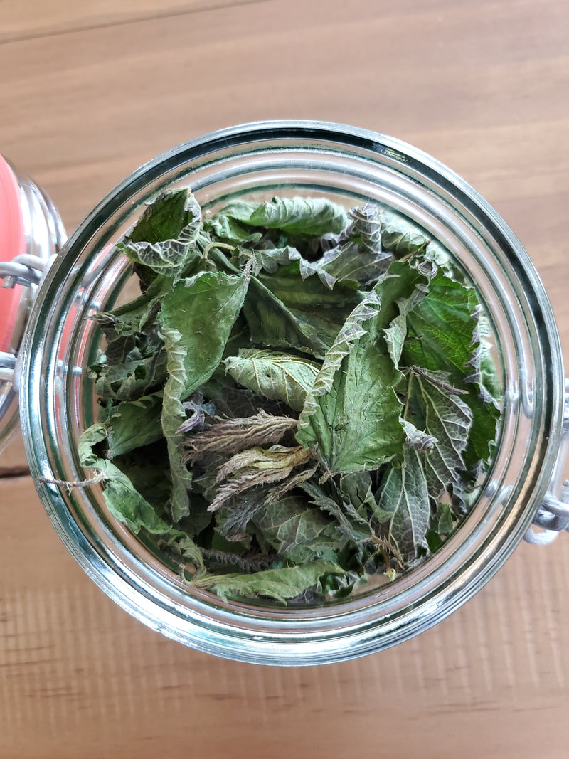 Wild Harvest Stinging Nettles Dried Leaves in 16oz Grosch Glass Jar