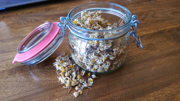 Wild Harvested Chamomile Dried Buds & Blooms 16oz Grolsch Jar