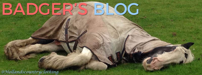 Badger's Blogg. Horsey Tales straight from the horse's mouth...