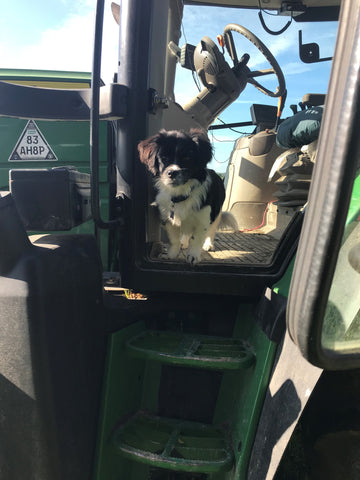 Puppy riding in tractor on farm