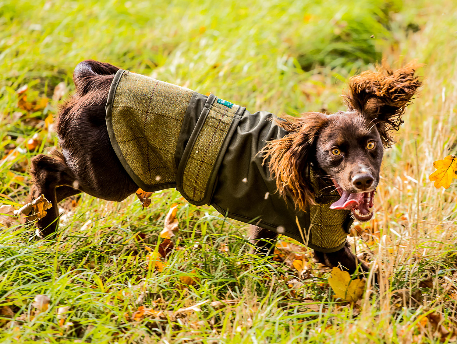 Alan Paine Tweed Dog Coat