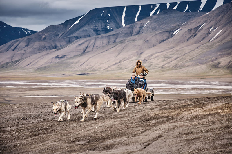 Trekking with dogs