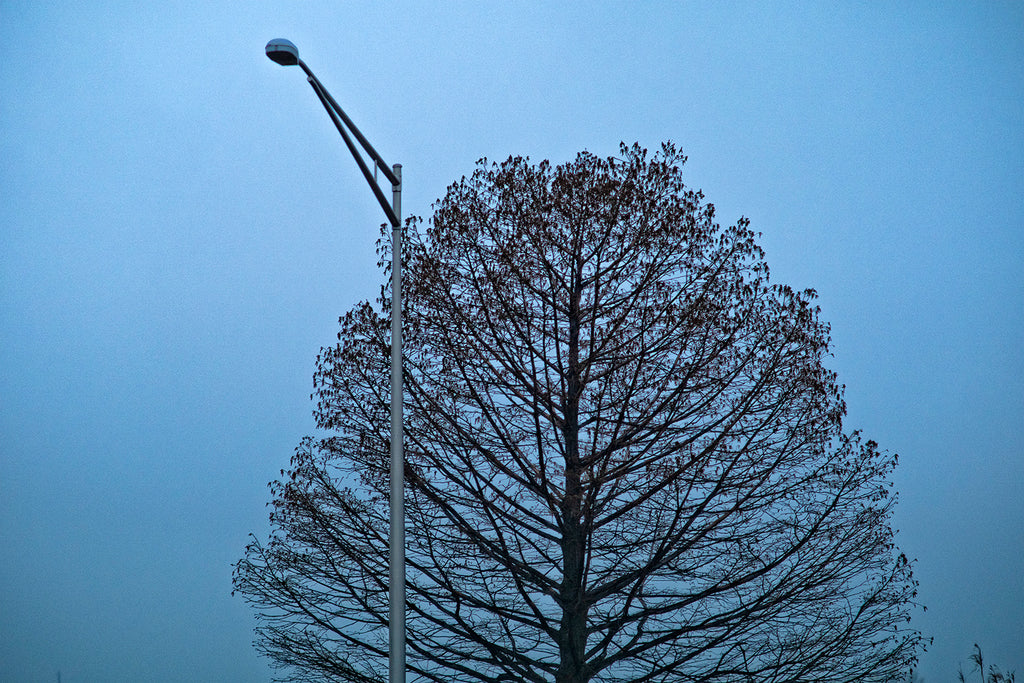 Tree and Lampost