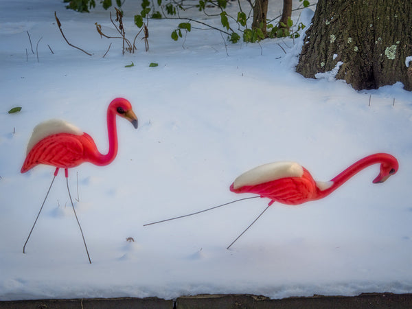 Frozen Flamingo