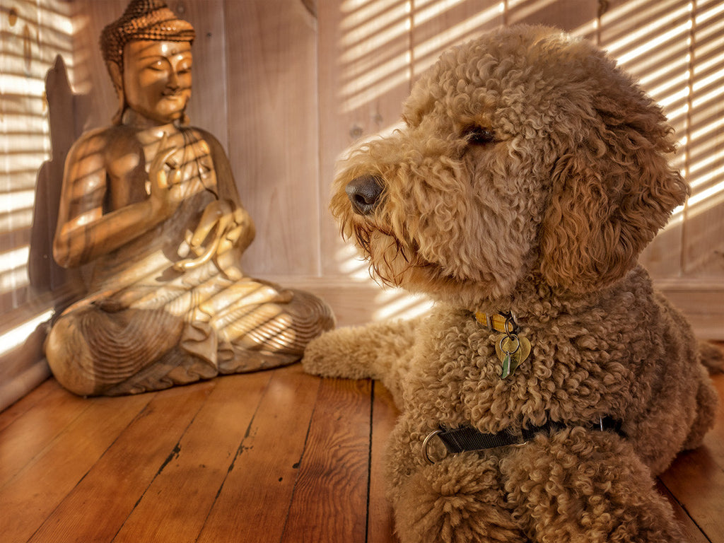 Doodle And Buddha