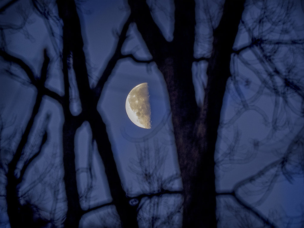 Half Moon In Trees