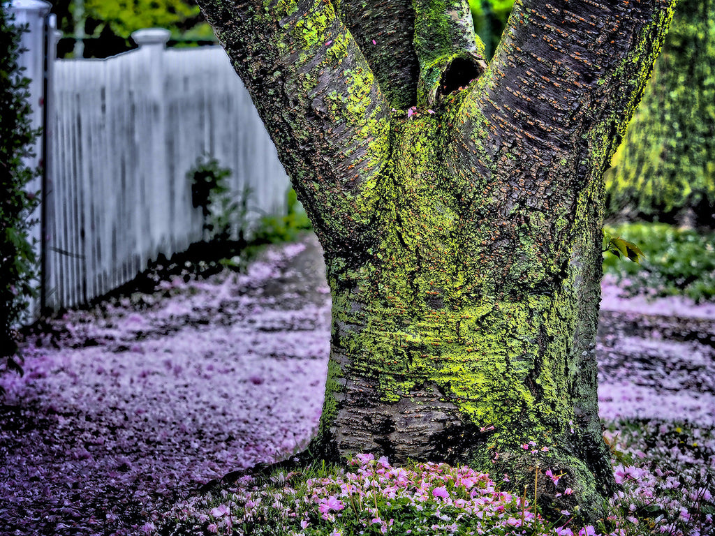 Green Tree Pink Sidewalk