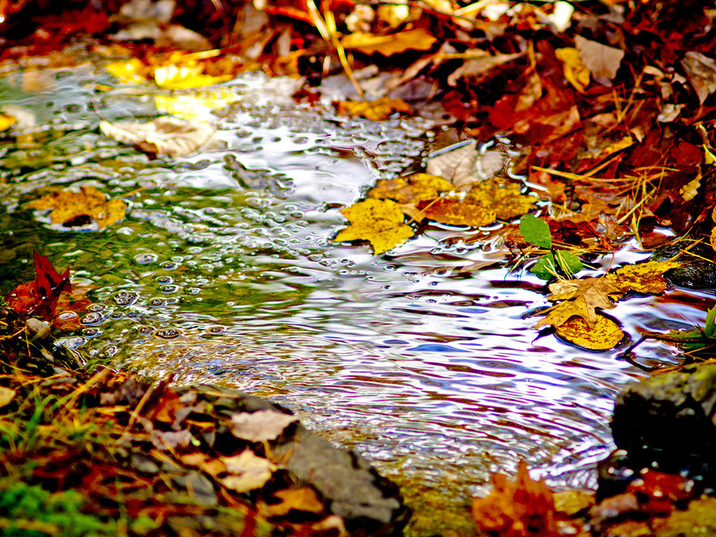 Fall Brook