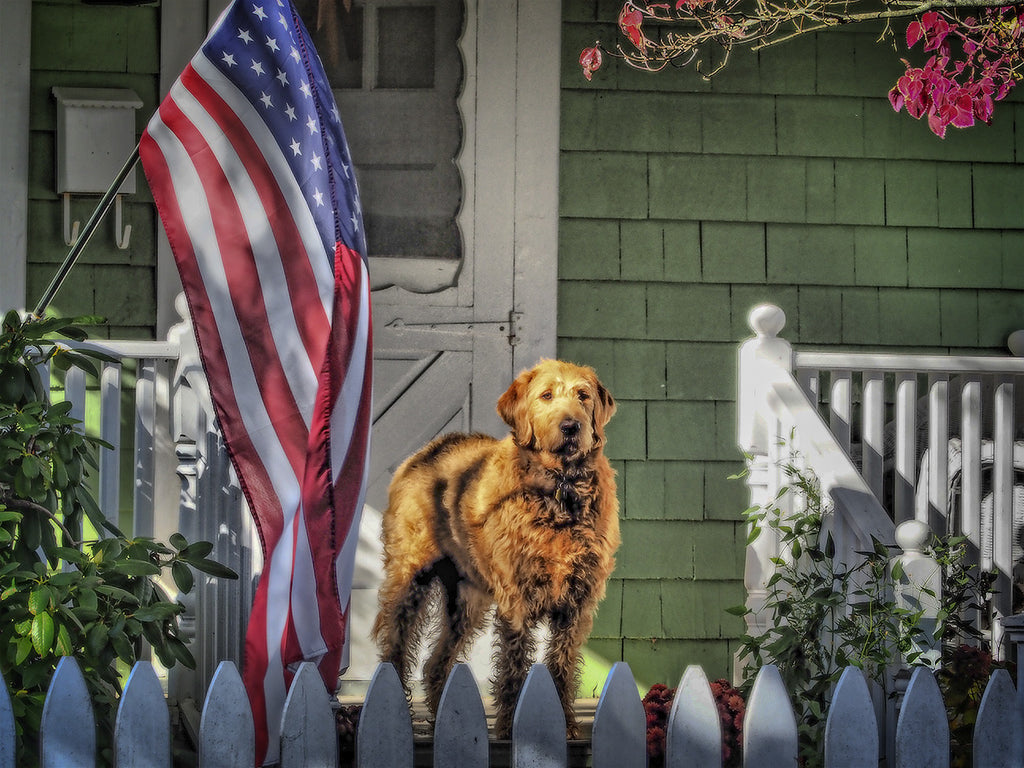 Pooch On Porch