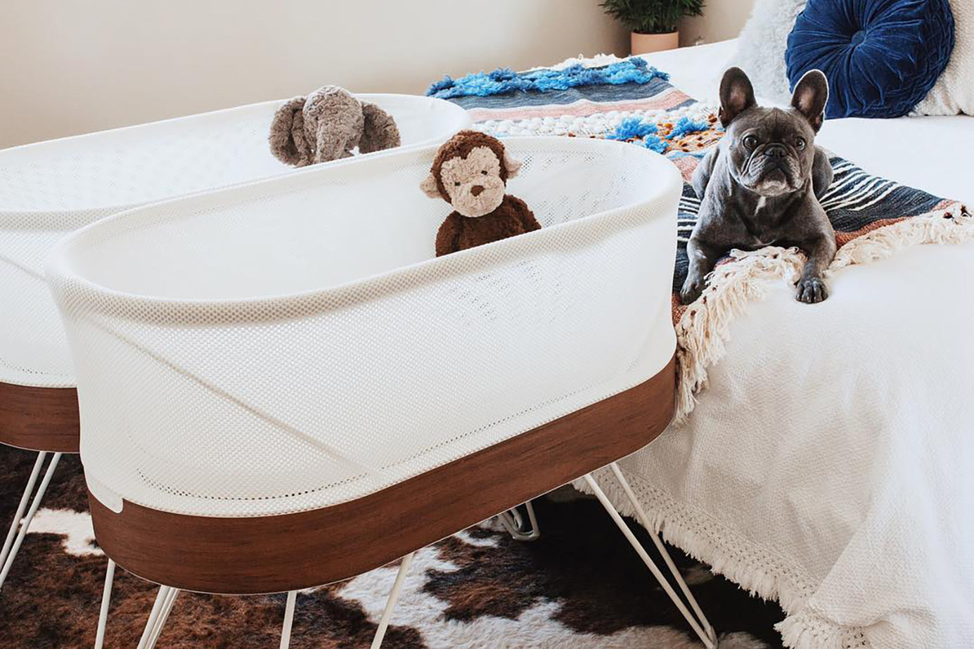 Dog Pregnancy Announcements Announce Your Pregnancy With Your Dog Happiest Baby