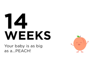 14-weeks-pregnant-your-baby-is-as-big-as-a-peach