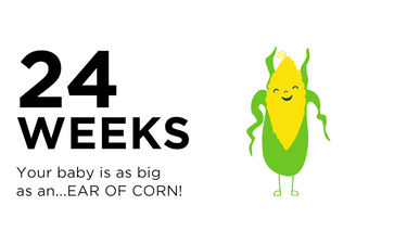 24-weeks-pregnant-your-baby-is-as-big-as-an-ear-of-corn
