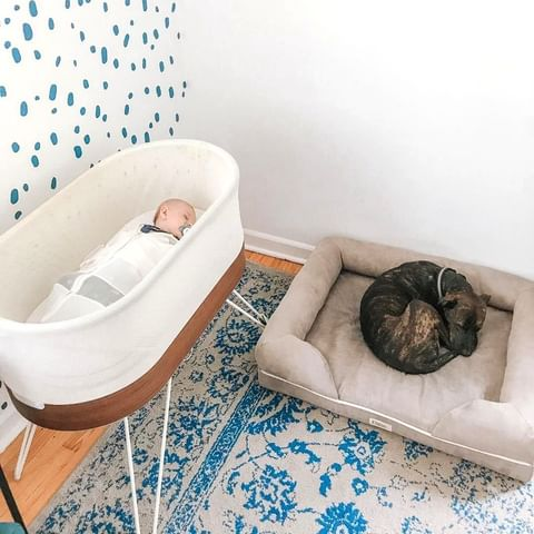 Baby sleeping in a SNOO smart sleeper in a nursery that has a blue polka dot wall and a blue and white floral rug. A dog naps next to the bassinet in a dog bed.