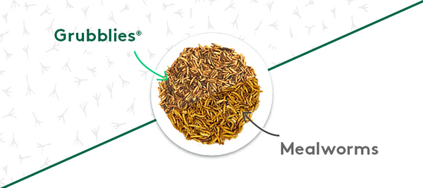 Mealworms or Grubblies