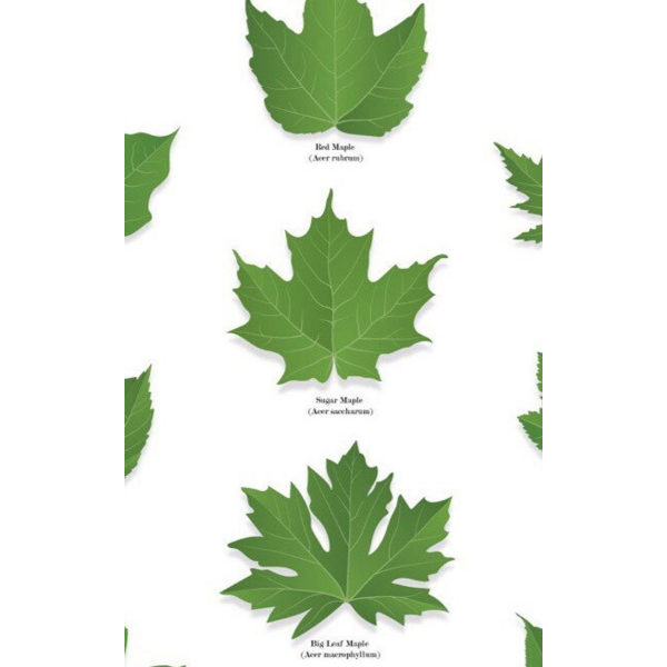 Maples of Canada Print | boogie + birdie