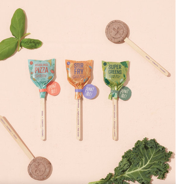 SEED LOLLIPOP - CULINARY - 3 PACK